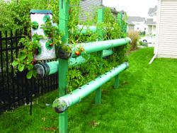 When Major C.T. Davis Decided To Plant A Garden, He Mounted Pvc Pipes On  Posts And Filled Them With Dirt.