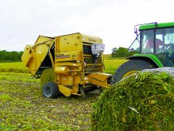 A Guide to Making Soybean Silage | Integrated Pest and Crop Management
