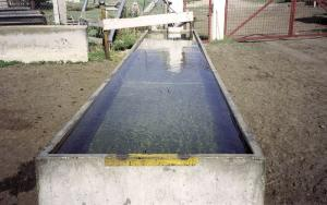 Cattle Water Trough Pool
