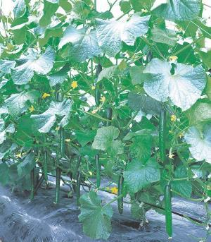 Amazon.com: Kitazawa Seed Company - New